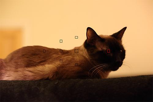 Canon 6d autofocus af low light auto focus system sample image